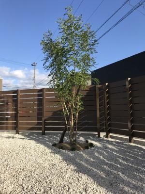 シマトネリコと板塀とライムストーン