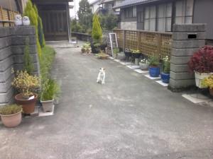 花壇・竹垣工事 富山市
