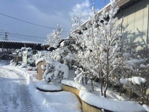 1月らしい寒さと雪到来