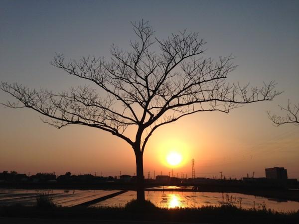 ネムノキ 合歓の木 1