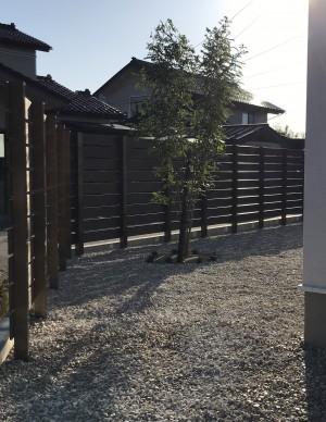 シマトネリコと板塀とライムストーン3