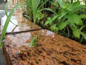 雑草だらけのレンガ花壇