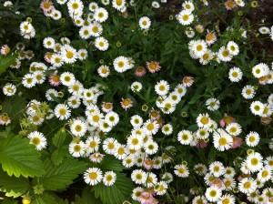 お花たちがさらに映えるやうに。。。富山市