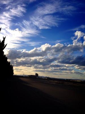 カイズカイブキと雲