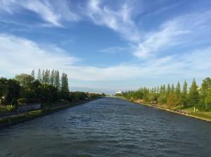 メタセコイアと運河