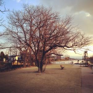 桜の木とたけぼうき
