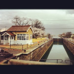 サクラと運河
